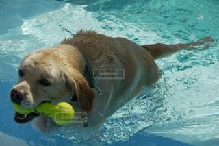 犬の写真・画像素材[557003]