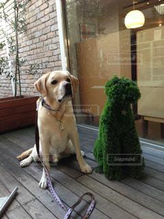 犬の写真・画像素材[557208]