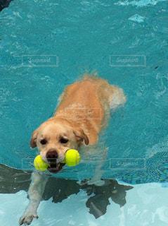 犬の写真・画像素材[557211]