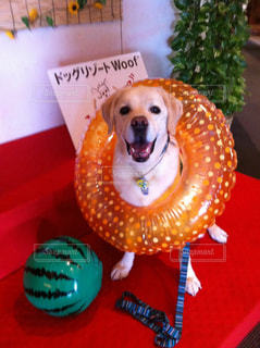犬 - No.557212