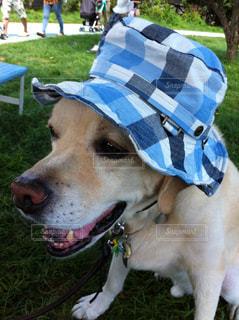 犬の写真・画像素材[557215]