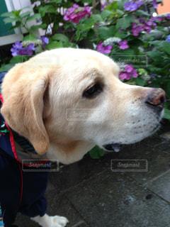 No.557354 犬