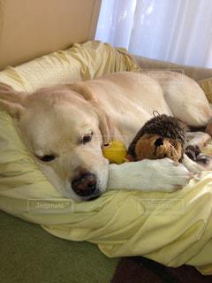 犬の写真・画像素材[557360]