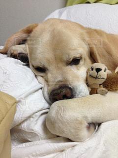 犬の写真・画像素材[557362]