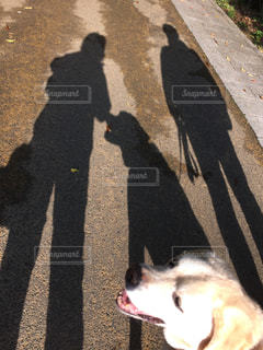 家族の写真・画像素材[557428]