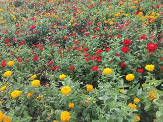 花の写真・画像素材[560828]