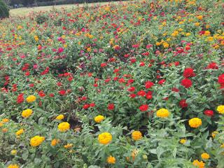 花の写真・画像素材[560829]