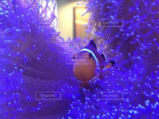No.559951 魚