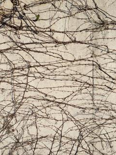 地図のような壁の写真・画像素材[998117]