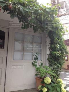 白いドアの前のミニガーデンの写真・画像素材[1026948]