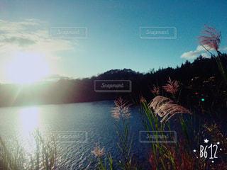 池の写真・画像素材[556356]