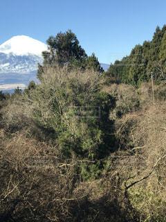 富士山の写真・画像素材[556588]