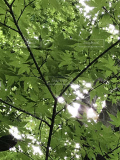 空の写真・画像素材[670925]