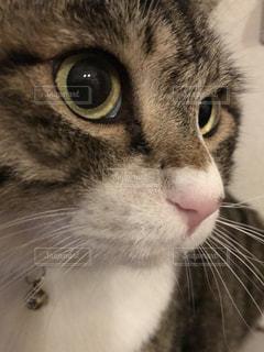 猫の写真・画像素材[560196]