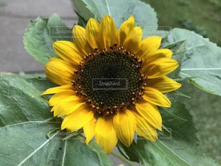 花の写真・画像素材[558860]