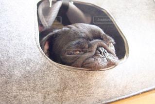 犬の写真・画像素材[557399]