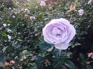 自然の写真・画像素材[558308]