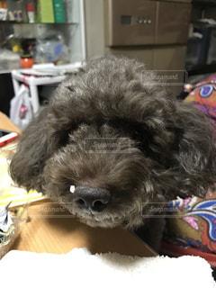 犬の写真・画像素材[558626]