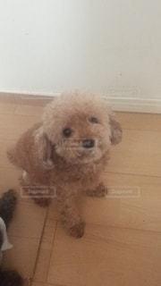 犬の写真・画像素材[560148]