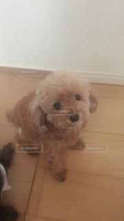 犬の写真・画像素材[560149]