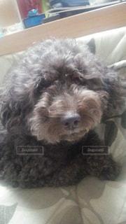 犬の写真・画像素材[560150]