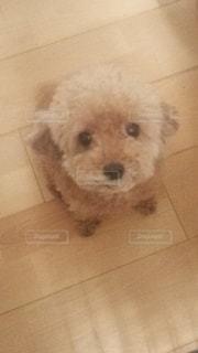 犬の写真・画像素材[560151]