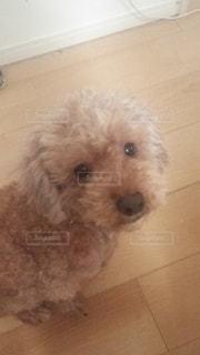 犬の写真・画像素材[560153]