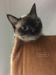 猫 - No.559105