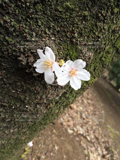 花の写真・画像素材[559071]