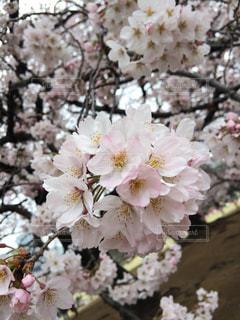 花の写真・画像素材[559072]
