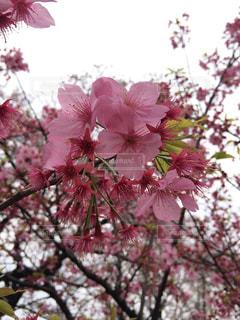 花の写真・画像素材[559073]