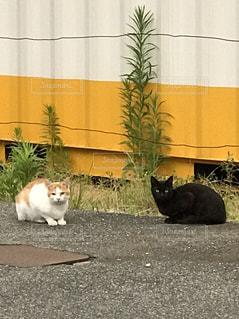 猫の写真・画像素材[606689]