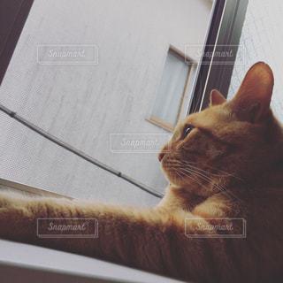 猫 - No.590968