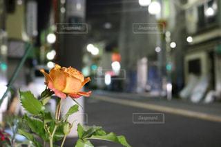 花の写真・画像素材[559488]