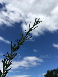 空の写真・画像素材[559807]