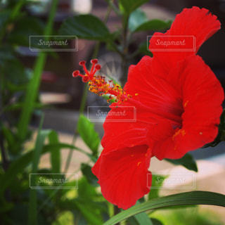花の写真・画像素材[563735]