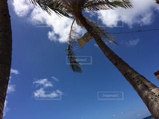 空の写真・画像素材[593608]