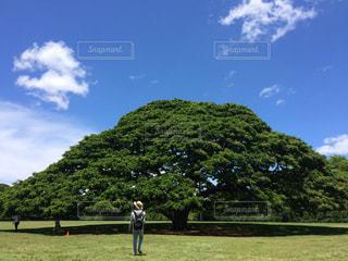 木の写真・画像素材[593642]