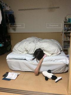 ベッドの上に横たわる犬の写真・画像素材[1612452]