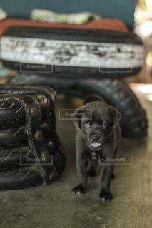 犬の写真・画像素材[1496980]