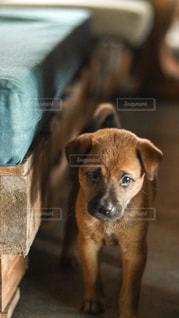 カメラを見ている犬の写真・画像素材[2938547]