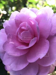 近くの花のアップの写真・画像素材[844821]