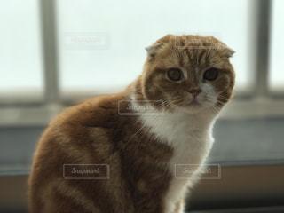 猫 - No.655042