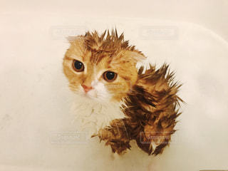 猫の写真・画像素材[655047]