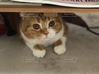 猫 - No.655056