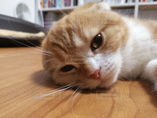 猫 - No.655069
