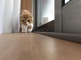 猫 - No.655073