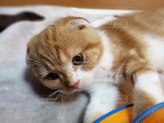 猫 - No.655074