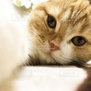 猫 - No.655077