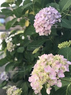 花の写真・画像素材[561569]